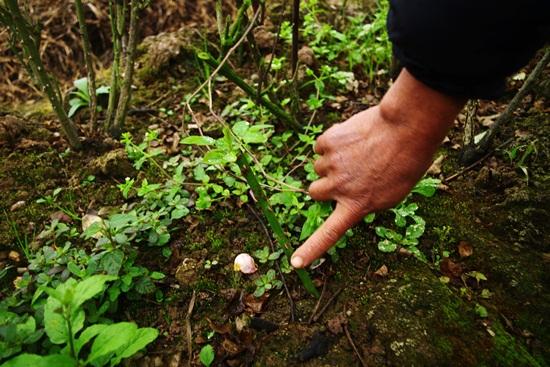 Kinh nghiệm trồng hoa hồng leo là chọn vị trí trồng tốt